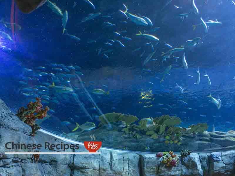 hong kong ocean park oceanarium aquarium tank 2