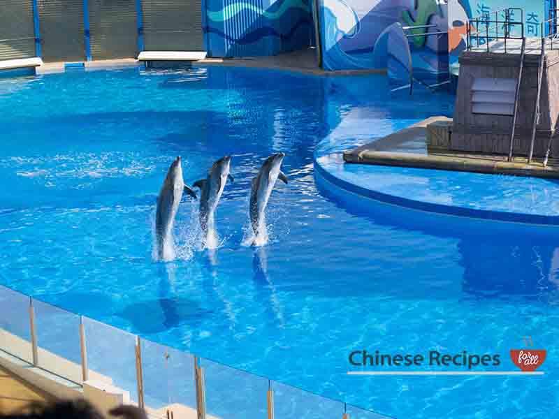 hong kong ocean park shows dolphin